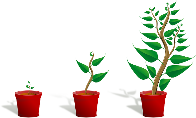 cara investasi bibit tanaman