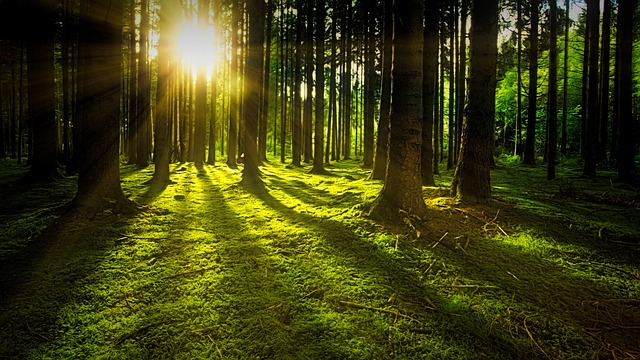 cara investasi tanaman kayu